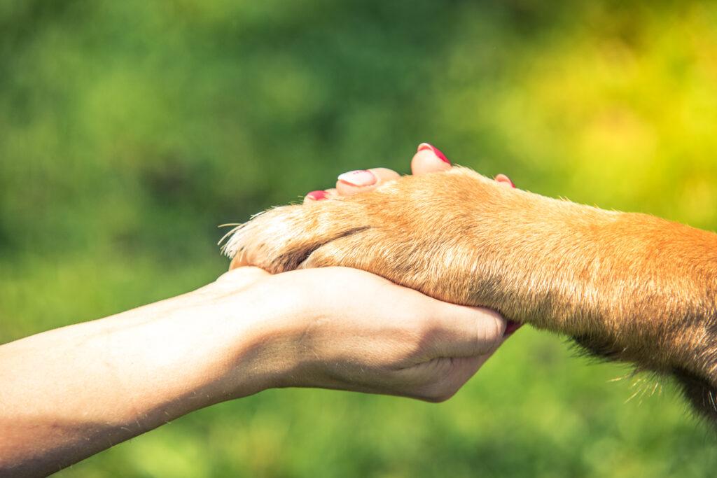 Eutanasia cane e gatto